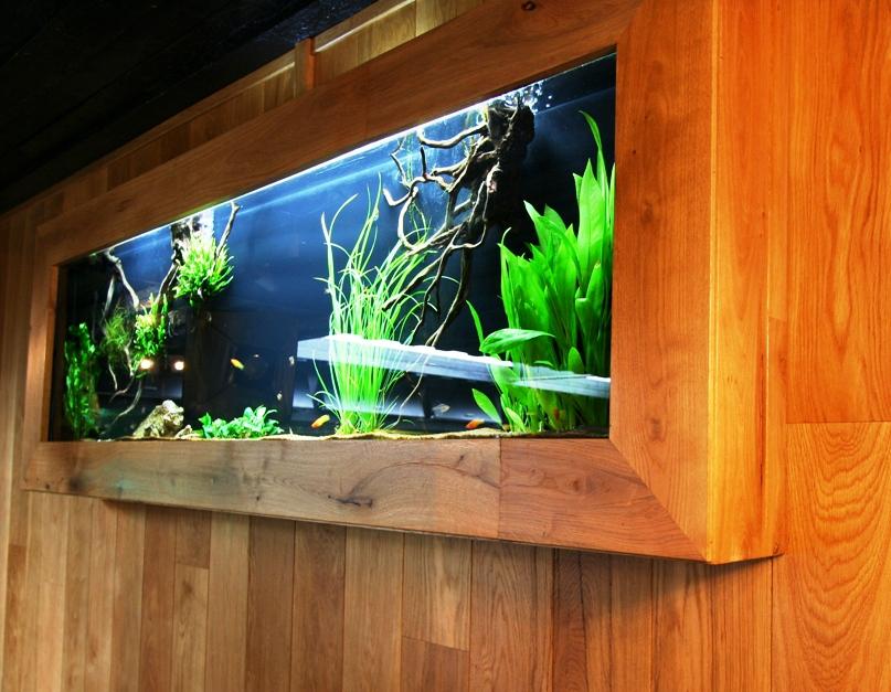 MUUR AQUARIUM   Speciaalzaak voor aquarianen en vijver  liefhebbers, met advies en ondersteuning