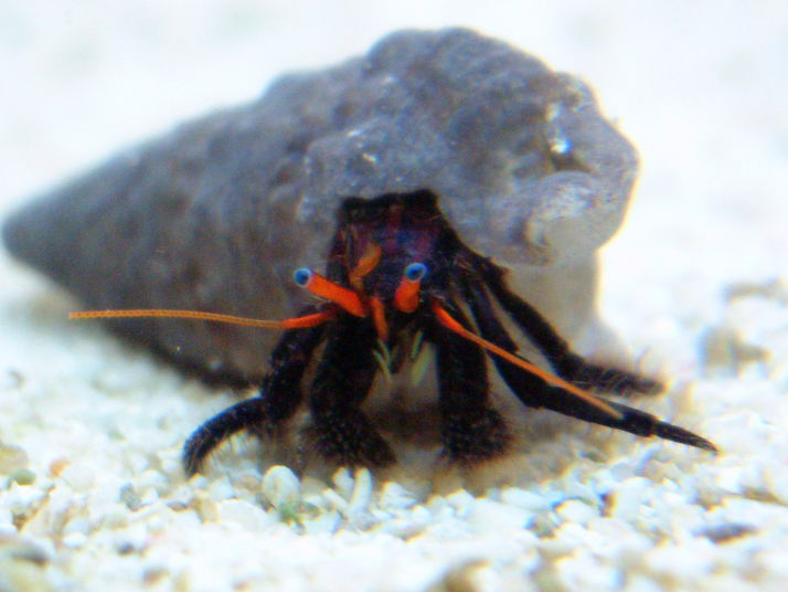 Speciaalzaak voor aquarianen en vijver  liefhebbers, met advies en ondersteuning bij aankoop van