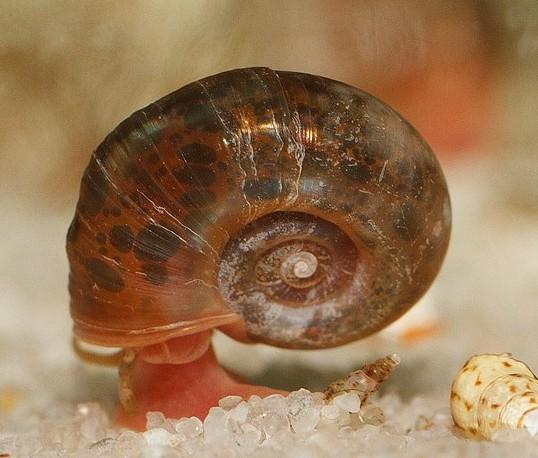 Slakken   Speciaalzaak voor aquarianen en vijver  liefhebbers, met advies en ondersteuning bij